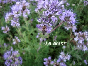 gájer méhészet