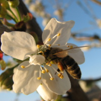 Méhészet